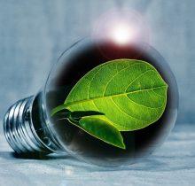Fluorescent_Chlorophyll_STEM activity